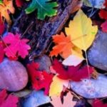 Разноцветная осень