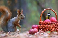 Осенью у всех забота